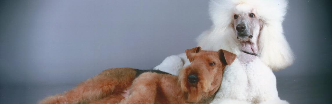 Dapper Dog Grooming
